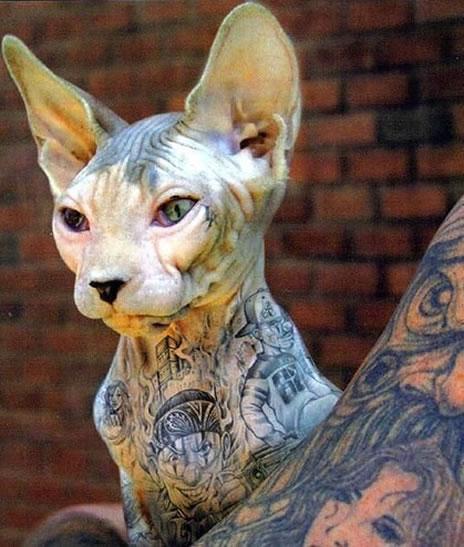 Sphynx Cat clipart Sphynx sphynx Animals Library skin