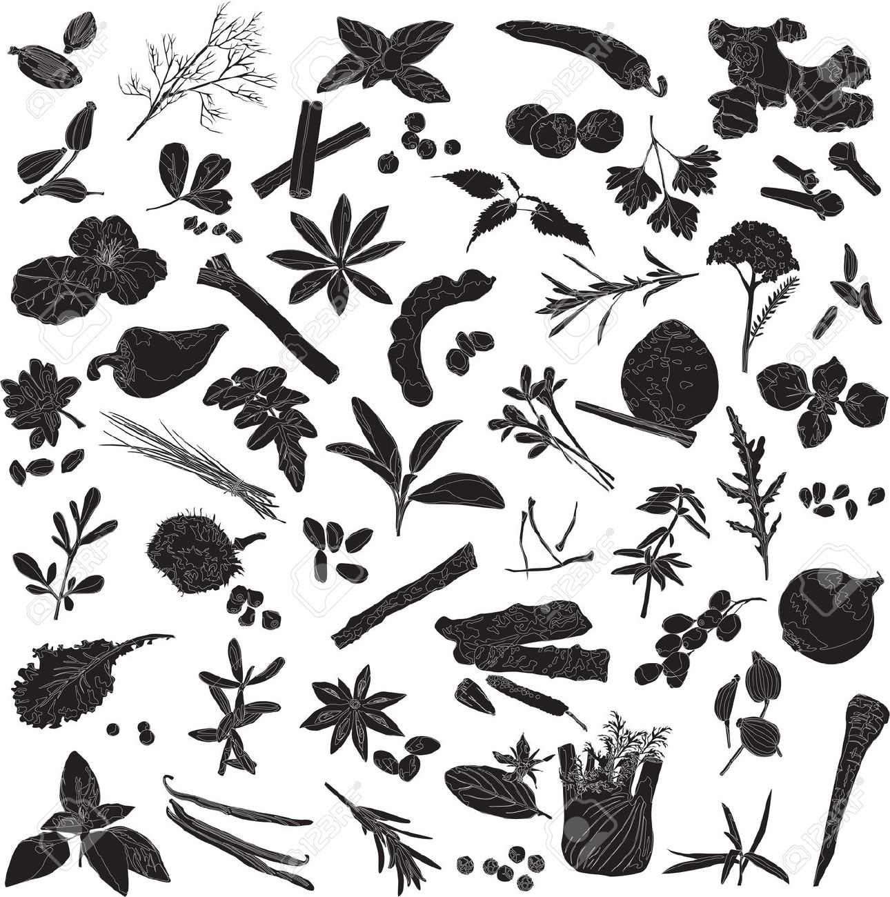 Spices clipart black and white & HERBS Commodities SPICES