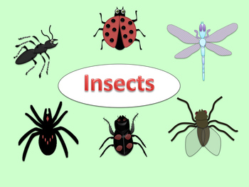 Gallery clipart insect Insects Clipart Spiders and clipart