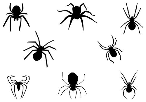 Shadow clipart spider #14