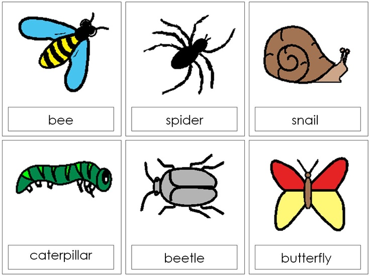 Caterpillar clipart minibeast Photos The best images lotto