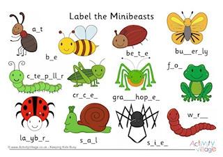 Beatle clipart minibeast Vocabulary Minibeast Minibeasts