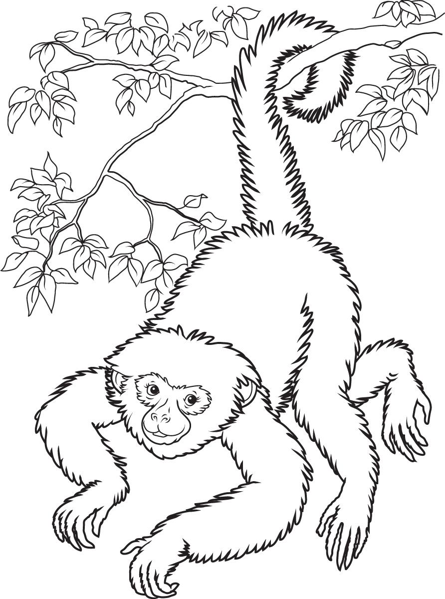 Spider Monkey clipart #11 Spider Download clipart Monkey