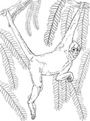 Spider Monkey clipart moneky Pictures Handed Free Printable Black