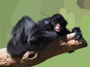 Spider Monkey clipart moneky Clker at A Clip To