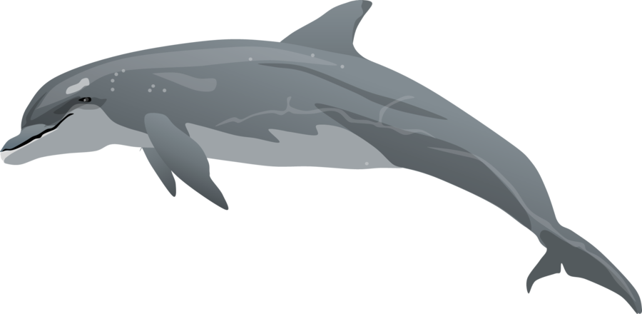 Spinner Dolphin clipart Dolphin Cliparting com Free Dolphin