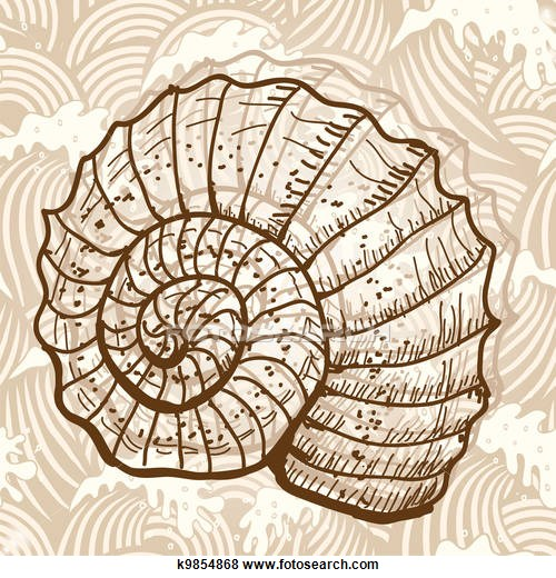 Spiral clipart seashell 6618 to royalty available Stock