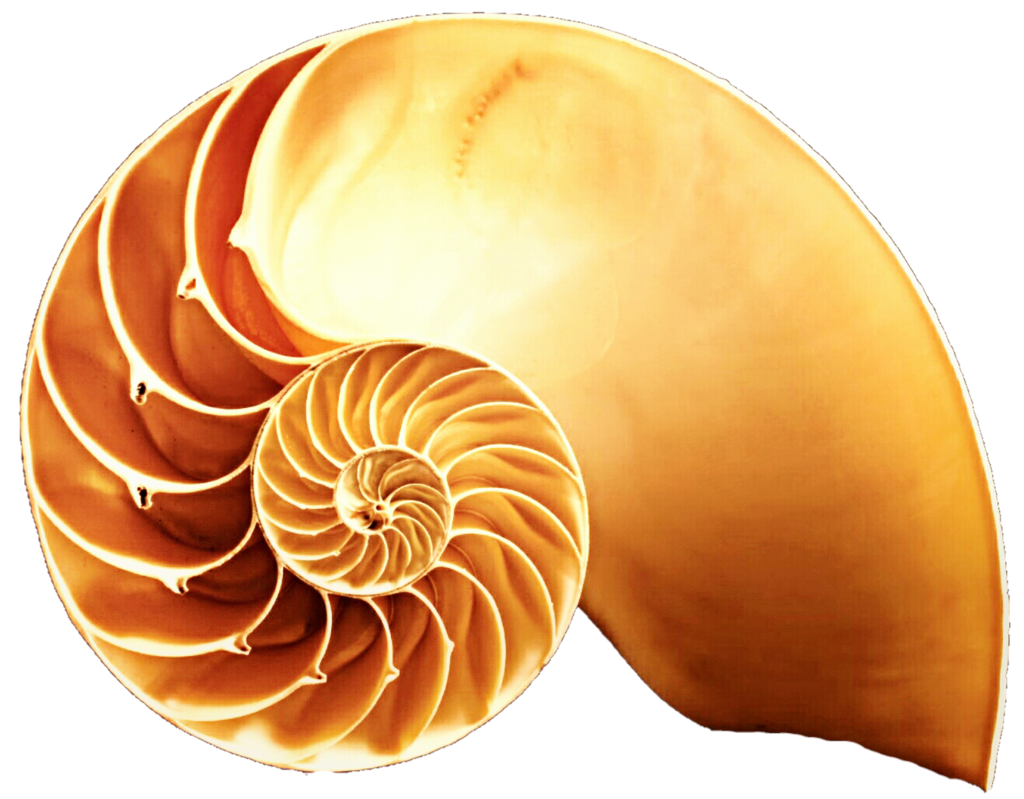 Spiral clipart snail shell Orange on in  Half