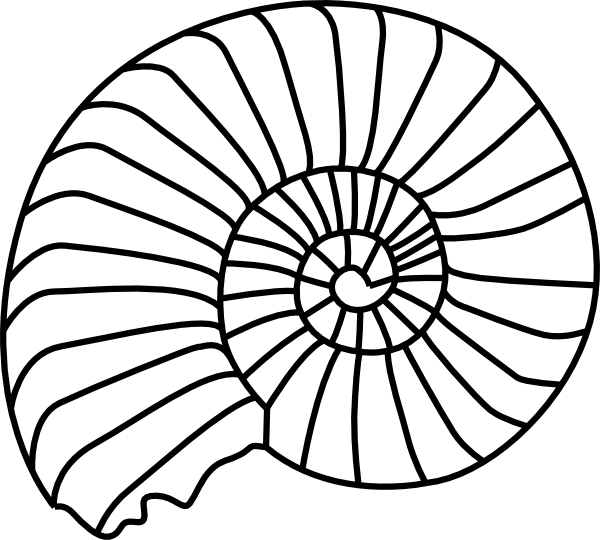 Spiral clipart snail shell Free  Shell Download on
