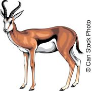 Springbok clipart Young background  Illustrations on