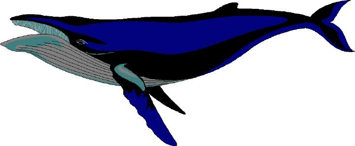 Humpback Whale clipart cute Whale Clipart Free Clipart Whale