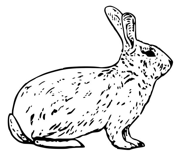 Rabbit clipart wild rabbit #6