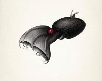 Drawn squid vampire squid A (Vampyroteuthis OC art of