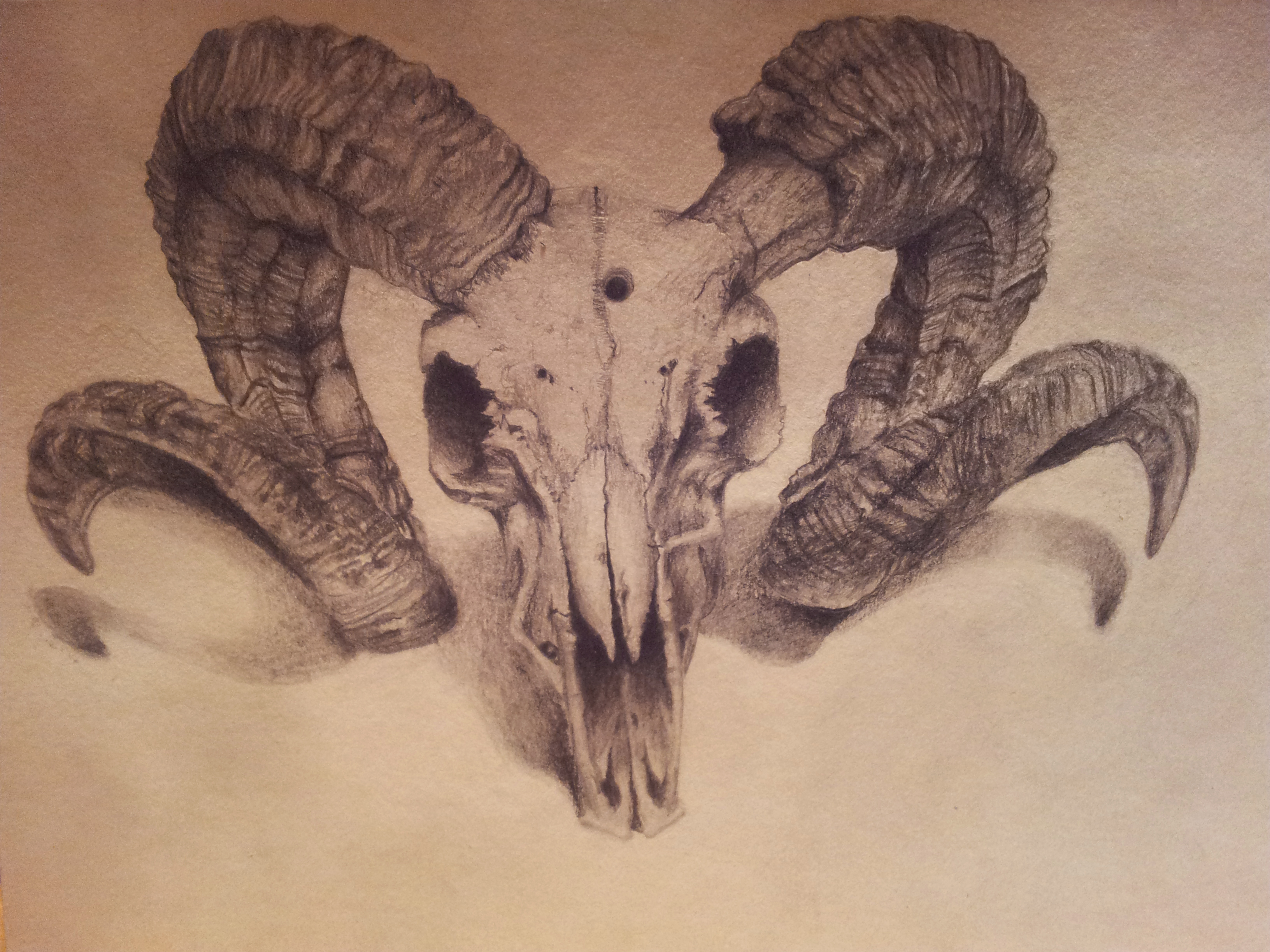 Drawn ssckull goat Ram best reference TattoosSkull ram_skull_by_backhendl