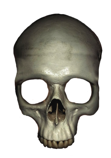 Ssckull clipart friendly Crown Clip skull human (and
