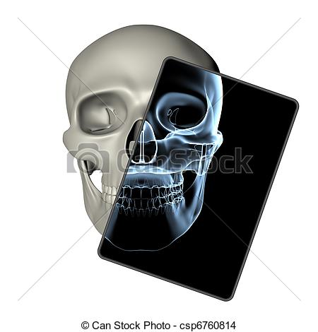 Ssckull clipart front #11