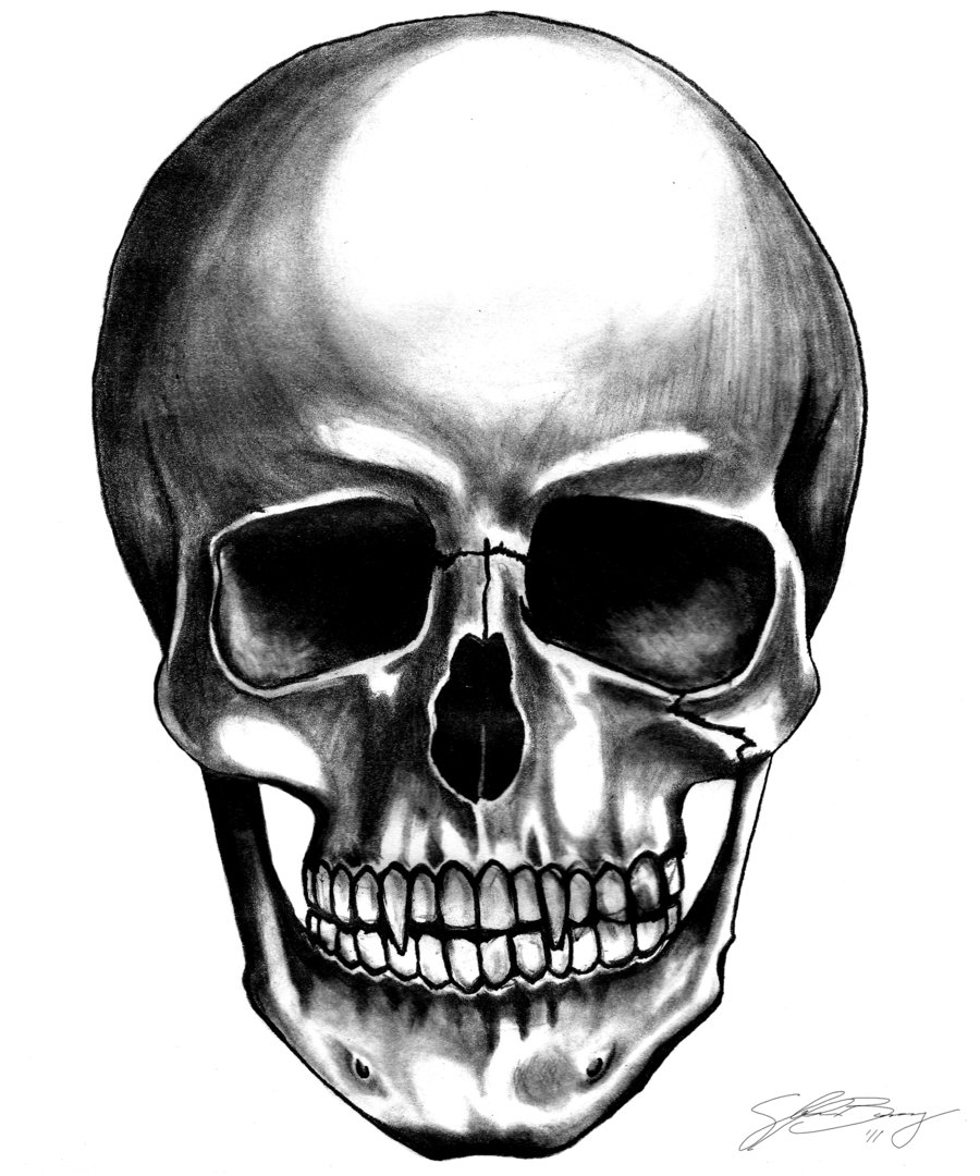 Ssckull clipart front Art dieFused Skull by library