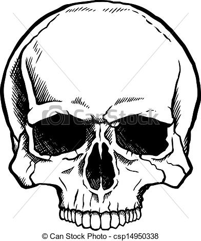 Ssckull clipart front And human without and white