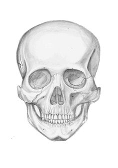 Ssckull clipart hamlet skull Skull the famous: Celebrities bone