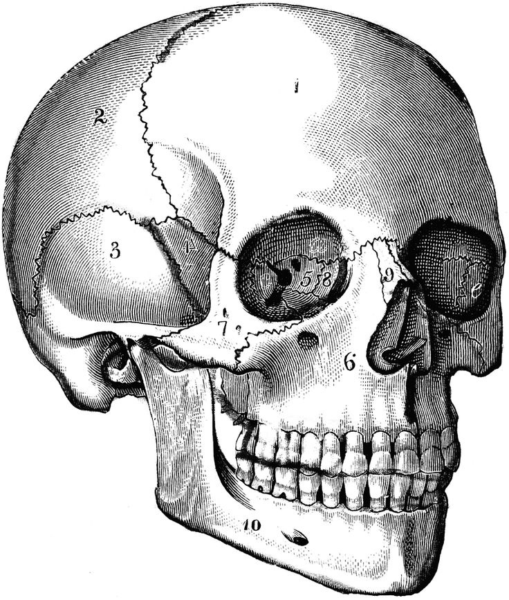 Ssckull clipart hamlet skull Images Find bones more on