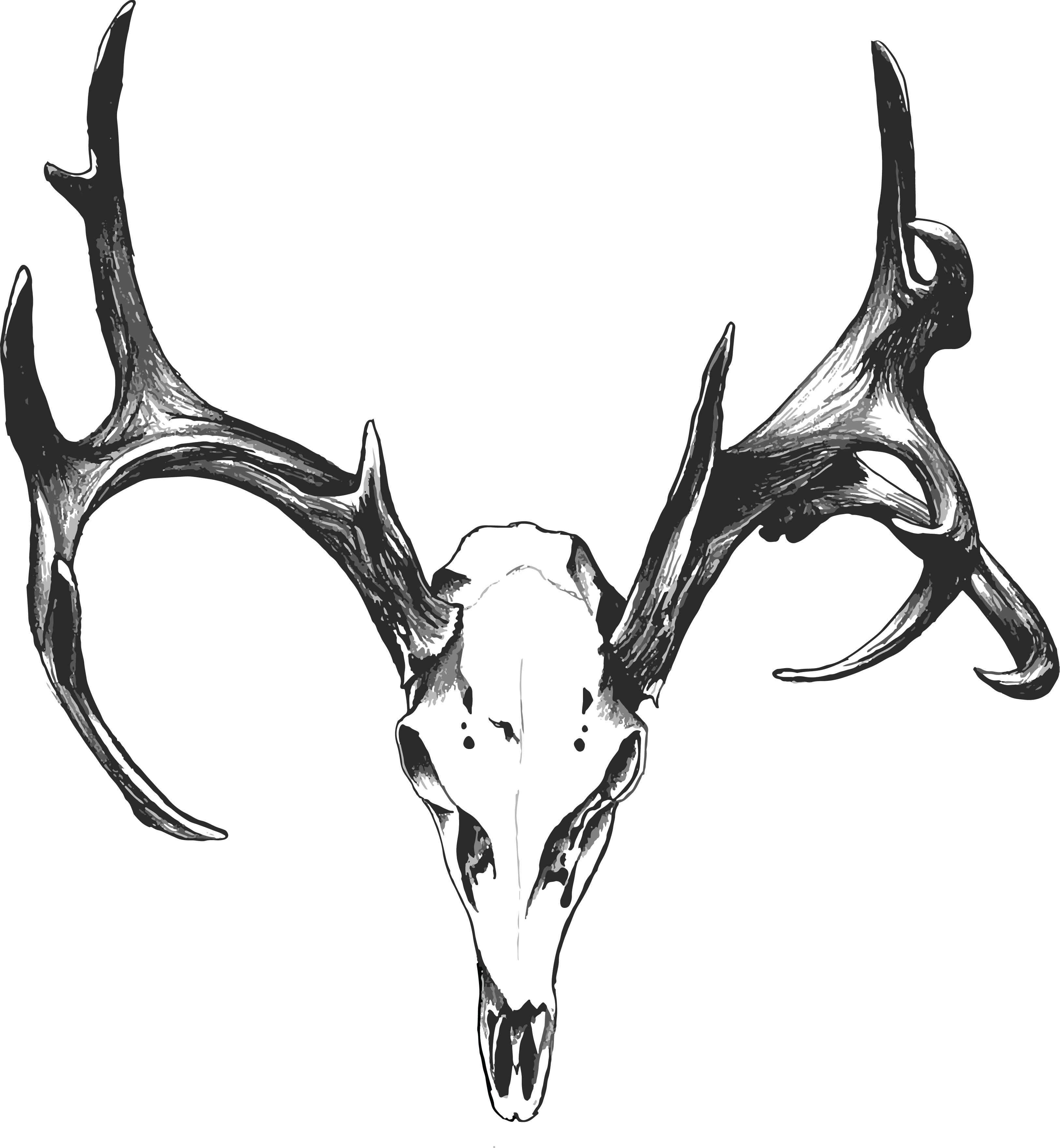 Drawn dear black and white Skull Mule deer  tattoos