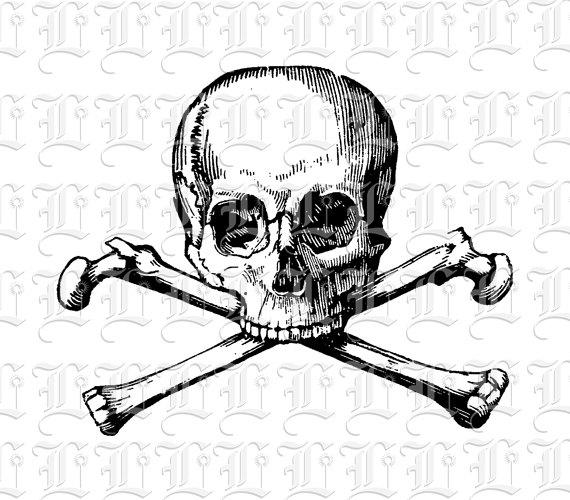 Ssckull clipart poison  Skull Studio Skull Printable