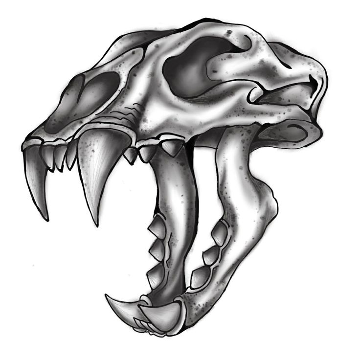 Drawn jaguar skull Saber tattoo Tooth tiger Tooth