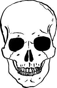 Sleleton clipart skeleton face On SKULLS about Skull Pinterest