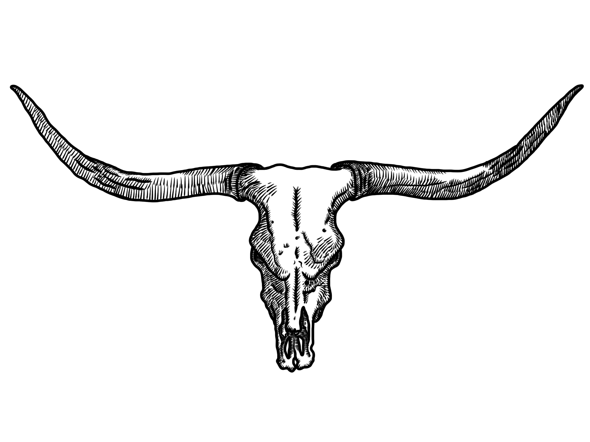 Drawn skull cow Skull Longhorn Cliparts Cattle Clip