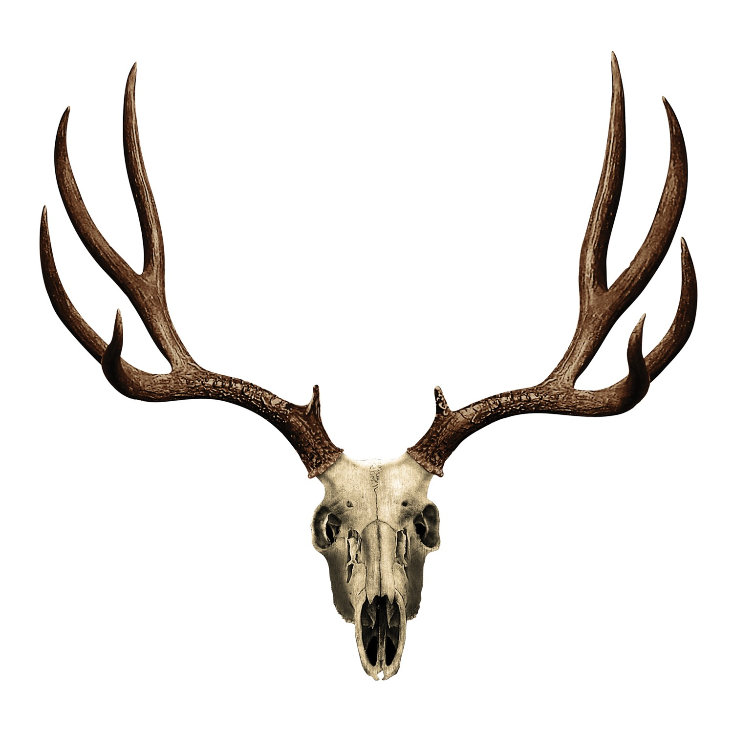 Ssckull clipart whitetail deer Best #14218 Clipartion Clip backgrounds