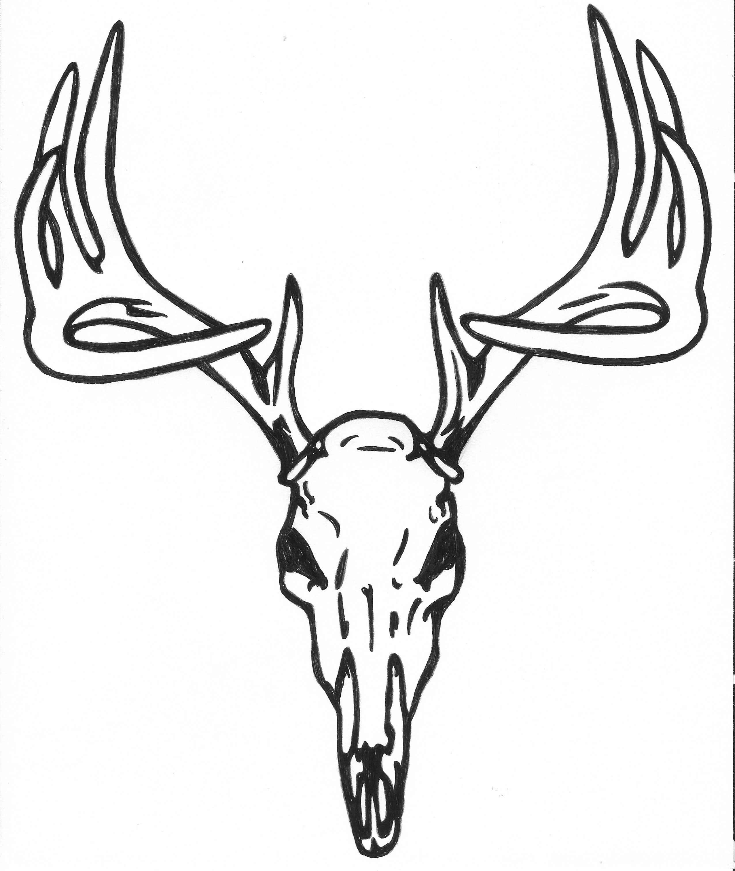 Drawn buck deer head Search  Image TATTOOS skull
