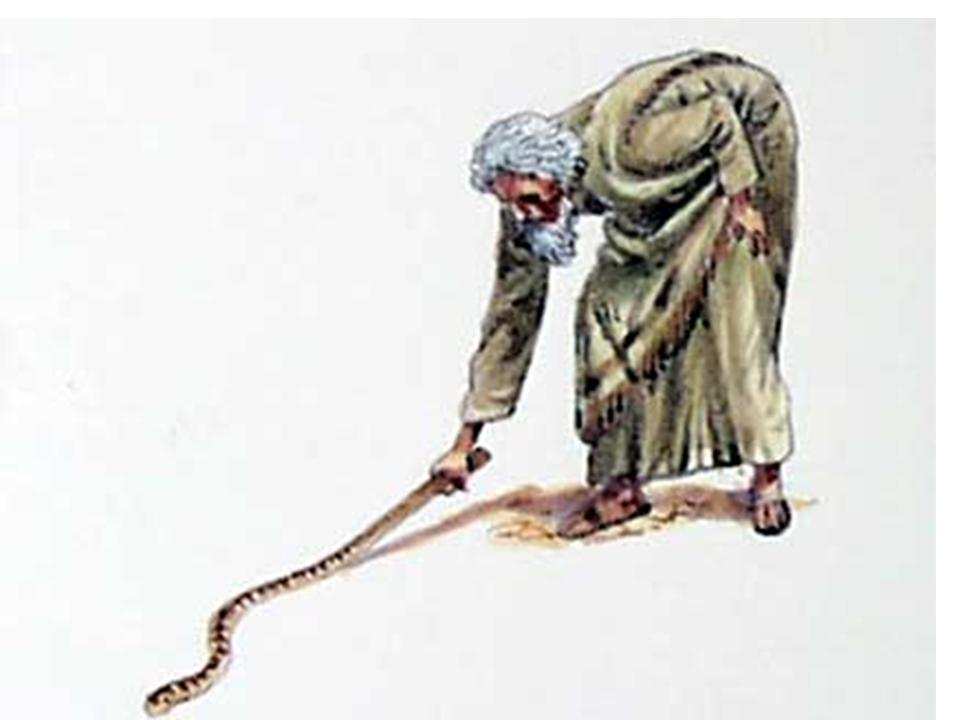 Staff clipart moses Image snakes snakes Image Pinterest