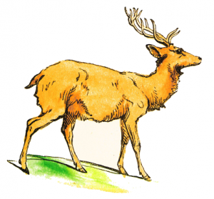 Stag clipart Page Download Art Stag Clip