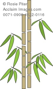 Stalk clipart Of Clip A Of Bamboo
