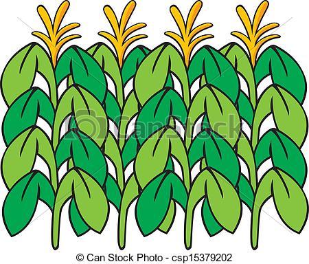 Cornfield clipart corn farm Panda stock Clipart Images foto