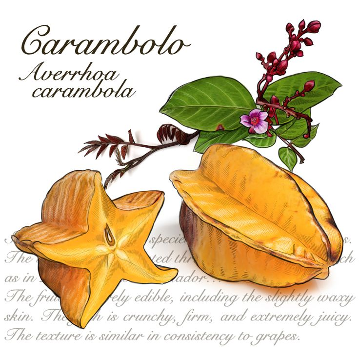 Star Fruit clipart tropical Pinterest We Illustration best Colombia