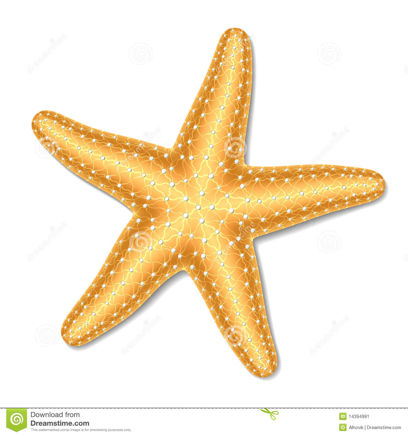 Starfish clipart #1058 16292 Starfish Clipart For