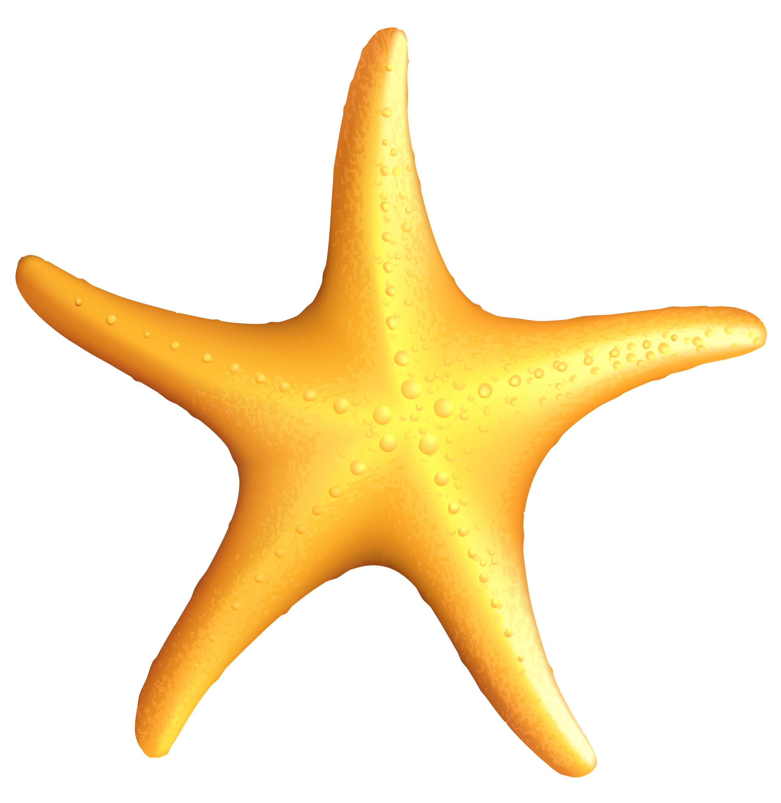 Starfish clipart Art starfish beach starfish clip