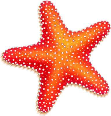 Ocean clipart starfish Colorful online Clipart Seashell Pinterest