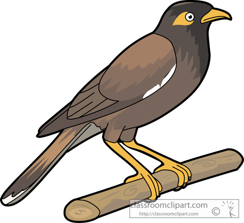 Starling clipart #6