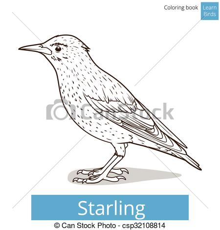 Starling clipart Csp32108814 coloring vector  Art