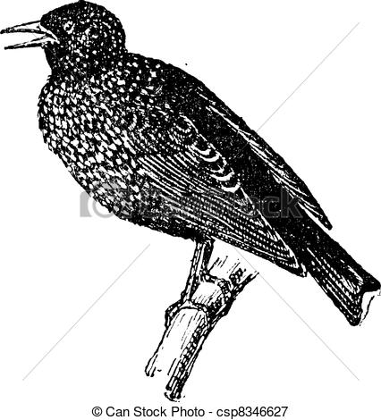 Starling clipart #8