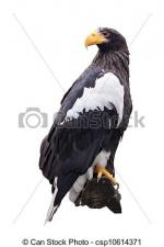 Steller's Sea Eagle clipart Clipart Eagle coloring coloring Steller's