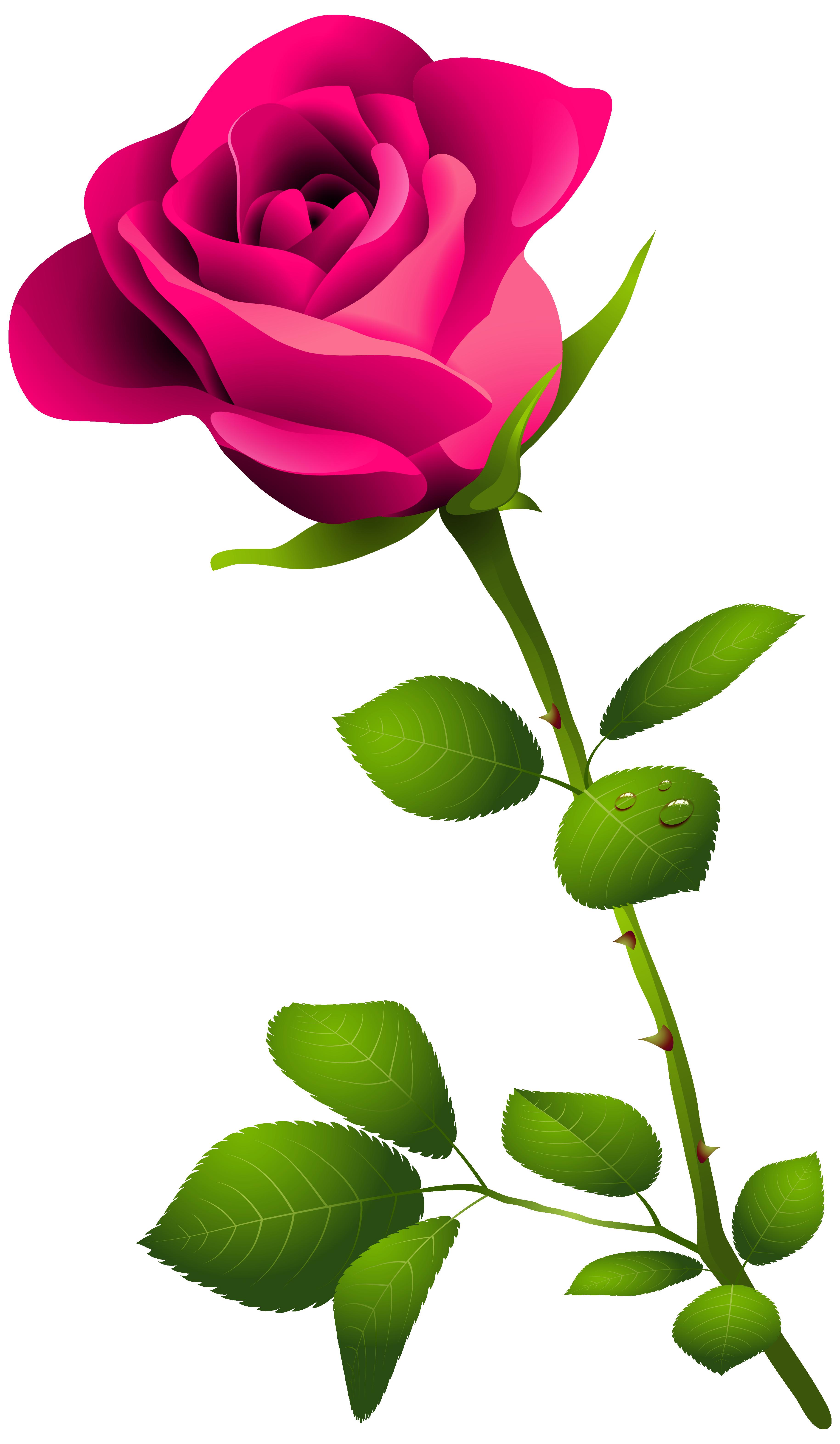 Rose clipart long stem rose #11