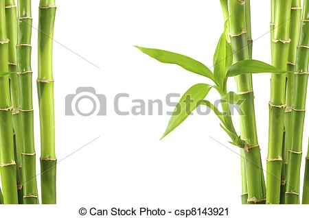 Stem clipart bamboo background Clipart of background isolated Stock