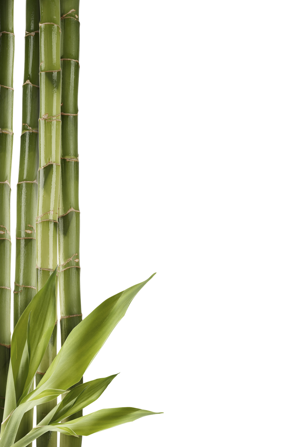 Bamboo clipart bamboo pole All PNG PNG Advertisement Images