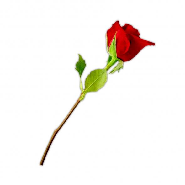 Red Flower clipart long #3