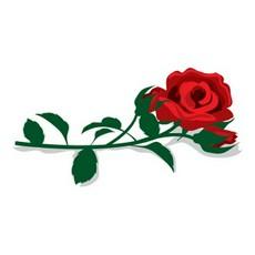 Rose clipart long stem rose #15