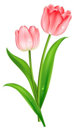 Stem clipart pink green flower Para Pink Tulips Art PNG