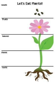 Plant clipart different kind plant A picture activity to Parts
